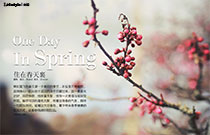 住在春天里