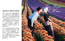 郁金香节 盛放中的花海