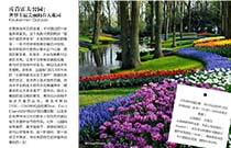 库肯霍夫公园:世界上最美丽的春天花园