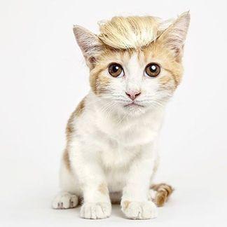 宠物太萌还是发型太酷?